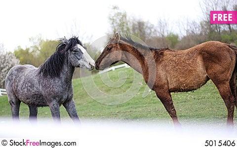 Free Two Loving Horses Royalty Free Stock Image - 5015406