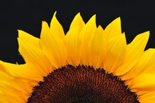 Free SunFlower Studio Series 22 Stock Photos - 5010193