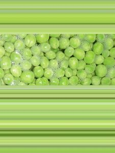 Peas And Line Design Royalty Free Stock Image