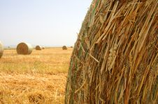 Free Golden Field 4 Royalty Free Stock Images - 5011879