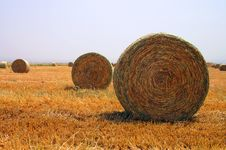 Free Golden Field3 Royalty Free Stock Photography - 5011887