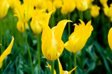 Beautiful Flower. Royalty Free Stock Photo