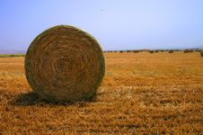 Free Golden Field 6 Royalty Free Stock Photo - 5011985