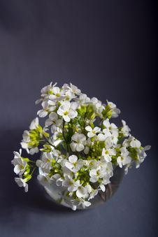 Free Bouquet Of White Flowers Royalty Free Stock Images - 5012009
