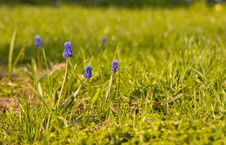 Free Spring Flowers Stock Photo - 5012020