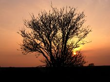 Free Tree And Sunset Stock Image - 5012111