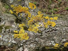 Free Lichen On Dead Log Royalty Free Stock Photo - 5012115