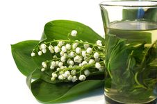 Free Bouquet Of Lilies Of The Valley And Tea Royalty Free Stock Photo - 5012975