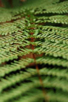 Free Fern Leaf Stock Images - 5013554