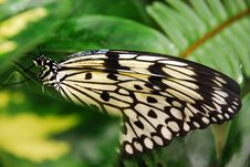 Free Butterfly Stock Images - 5013594