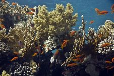 Free Coral And Fish Royalty Free Stock Image - 5014466
