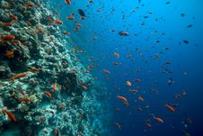 Free Coral And Fish Royalty Free Stock Photos - 5014568