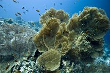 Free Seafan, Coral And Fish Stock Photography - 5014582