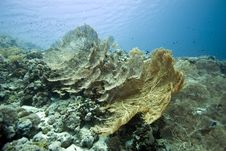 Free Seafan, Coral And Fish Stock Images - 5014604