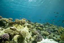 Free Coral And Fish Stock Images - 5014754