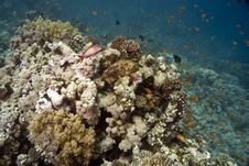 Free Coral And Fish Royalty Free Stock Images - 5014989