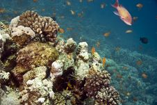 Free Coral And Fish Stock Photo - 5014990
