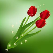 Free Three Tulips Stock Photo - 5015040