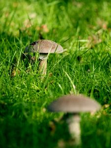Free Wild Fungi Royalty Free Stock Images - 5015129