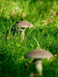 Free Wild Fungi Royalty Free Stock Images - 5015129
