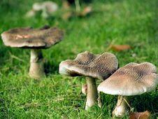 Free Wild Fungi Royalty Free Stock Images - 5015179