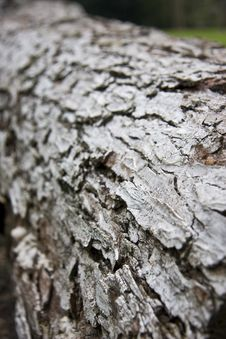 Free Bark On A Log Stock Photos - 5015243