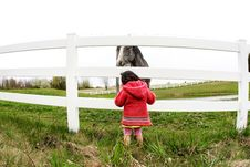Free Child And Horse Staring2 Royalty Free Stock Image - 5015346
