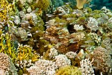 Free Coral And Fish Royalty Free Stock Images - 5015409