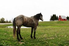 Free Horse In The Barn Royalty Free Stock Images - 5015439