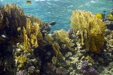 Free Coral And Fish Stock Images - 5015464