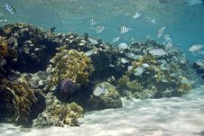 Free Coral And Fish Stock Photography - 5015472