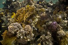 Free Coral And Fish Royalty Free Stock Photos - 5015508