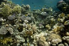 Free Coral And Fish Royalty Free Stock Image - 5015596