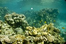 Free Coral And Fish Royalty Free Stock Photos - 5015628