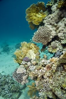 Free Coral And Fish Stock Photography - 5015632