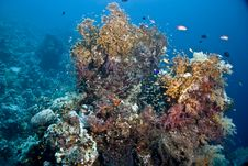 Free Coral And Fish Royalty Free Stock Image - 5015756