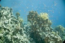 Free Coral And Fish Royalty Free Stock Images - 5015939