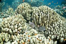 Free Coral And Fish Royalty Free Stock Photography - 5016077