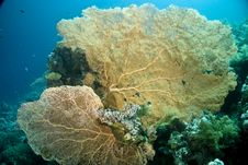 Free Seafan, Coral And Fish Stock Images - 5016134
