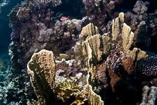 Free Coral And Fish Royalty Free Stock Photography - 5016147