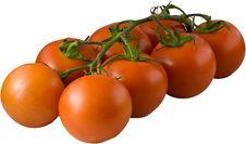Free Tomato7 Royalty Free Stock Images - 5016889
