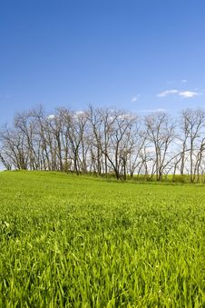 Green Grass And Blue Sky With Tree