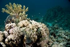 Free Coral And Fish Stock Images - 5017994