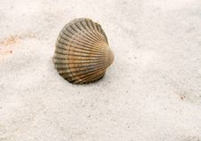 Free Sea Shell Stock Photography - 5018022