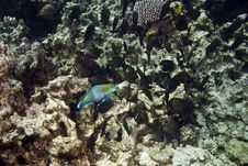 Free Coral And Fish Royalty Free Stock Image - 5018026