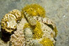 Free Reef Lizardfish (synodus Variegatus) Royalty Free Stock Photography - 5018767