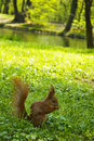 Free Squirrel Royalty Free Stock Image - 5029816