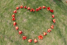 Free Red Ceiba Kapok Flower Heart Stock Photo - 5020010
