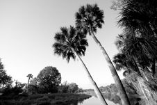 Free Myakka Palm Trail Stock Photography - 5020512