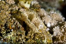 Free Feather Duster Worm (sabellastarte Indica) Royalty Free Stock Photo - 5020745